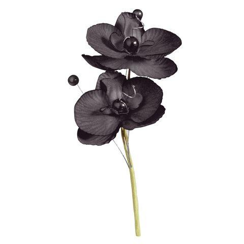 orchidee noire avis