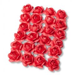 24 roses corail