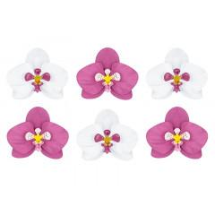 6 Orchidées blanche et fuchsia à monter