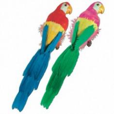 Perroquet en plumes