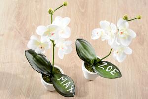 Fleurs mariage et orchidées
