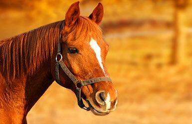 décoration anniversaire cheval