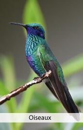 deco theme oiseaux