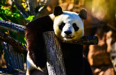 deco anniversaire theme panda