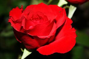 theme rouge et blanc mariage