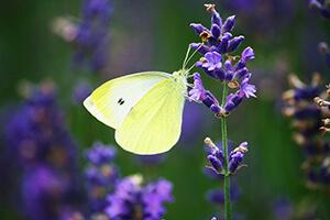 deco mariage jaune et violet
