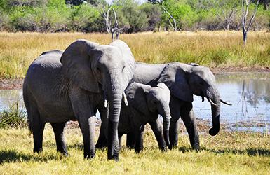 deco anniversaire animaux safari